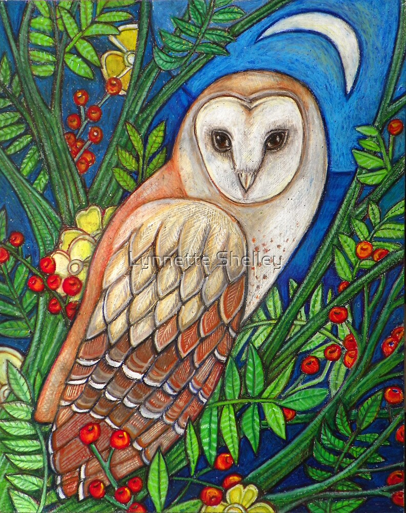 White Heart (Portrait of a Barn Owl) by Lynnette Shelley