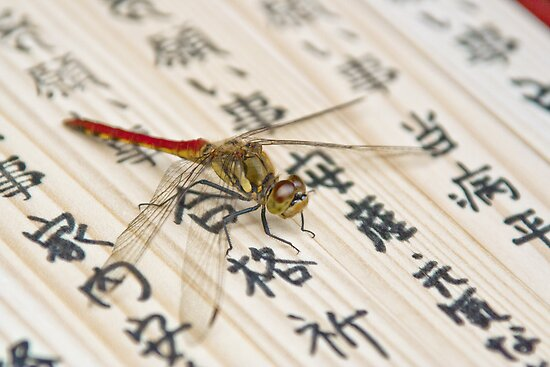 Dragonfly on Japanese Parchment by matthewbam