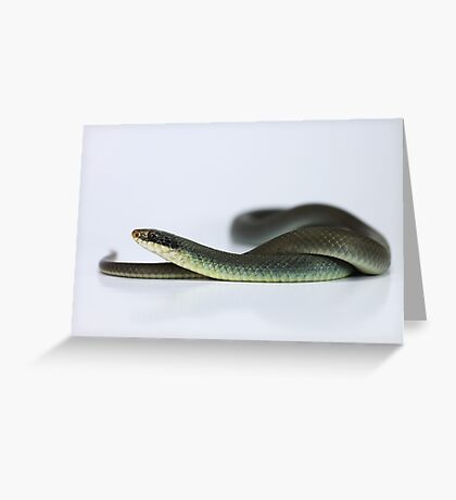 Blue Racer (Coluber constrictor foxii) Greeting Card