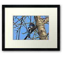 Bluebird of Happiness Framed Print