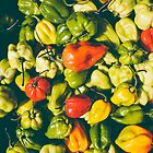 hot peppers by jdurban