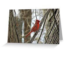 Royal Redbird Greeting Card