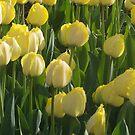 The Tulip Garden by Tsebiyah Mishael Derry