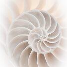 Nautilus by Barbara Ingersoll