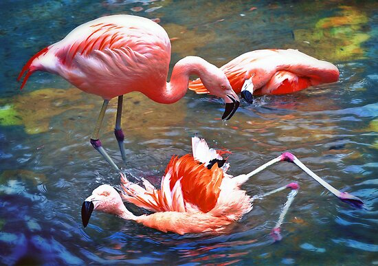 Flamingos by venny