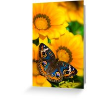 Buckeye Butterfly in all it's Beauty  Greeting Card