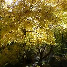 Autumn at Jenolan by PhotosByG