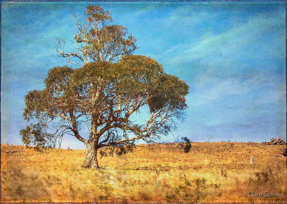 Love of Australian Country by Clare Colins