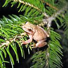 baby female tree frog by LoreLeft27