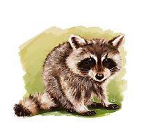 Raccoon - Digital Painting by Tom Lopez Photographic Print