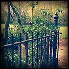 Gate at the Park by Lisa Hafey