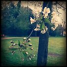 Blossom at the Park by Lisa Hafey