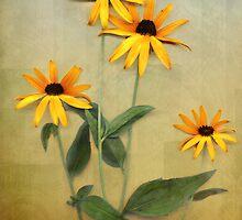Four Susans on Canvas by Eileen McVey