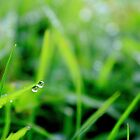 Early-morning dew. by Kathy Behrendt