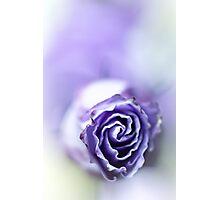 Purple breeze....(soft 1) Photographic Print