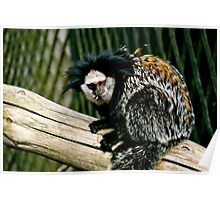 Little monkey/marmoset Poster