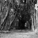 The secret path  by MattyWerts