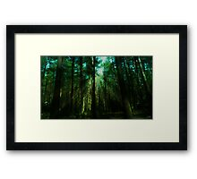 Rays of sun through Tynenhame Forest Framed Print