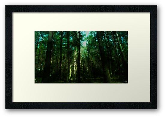 Rays of sun through Tynenhame Forest by Sue Fallon Photography