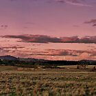 Mt William, Lancefield.  by Kylie Mckay