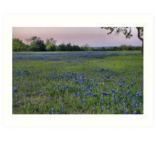A Field of Bluebonnets - Texas Art Print