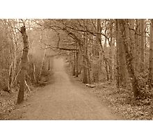 Forest - Bumpy Road Photographic Print