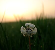 Good Morning Dandelion by Bradley  Rea