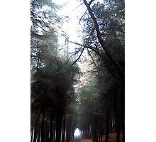 Woodland path at Beacon Fell, Lancashire, UK Photographic Print
