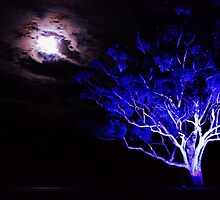 Blue Tree, Heart Moon. by Kylie Mckay