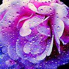 Raindrops © by Dawn M. Becker