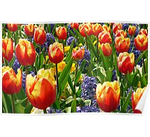 Spring Flowers Poster