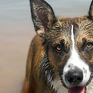 Dog in The Lake by amyschuldies