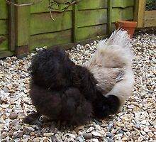 Two Silkie Hens by Dionne Meade