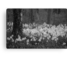 Woodland flowers! Canvas Print