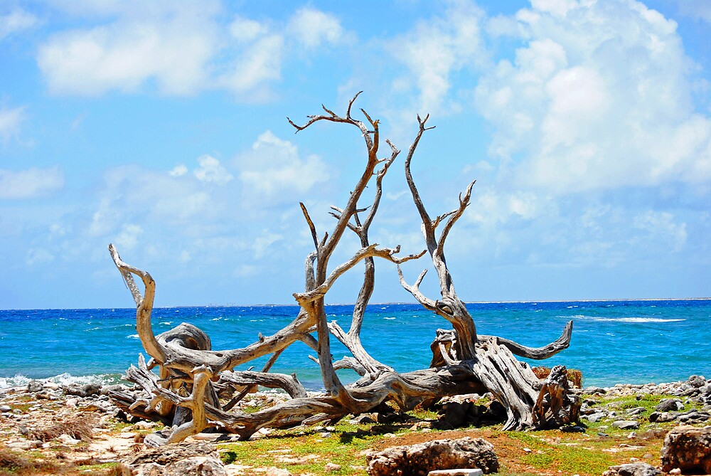 Driftwood in Bonaire, Dutch Caribbean by emilyduwan