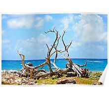 Driftwood in Bonaire, Dutch Caribbean Poster