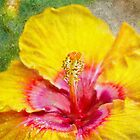 Hibiscus In Bloom by Kathy Nairn