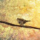 Good Day Sunshine by Kathy Nairn