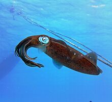 Underwater Squid by emilyduwan