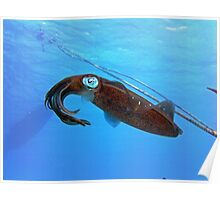 Underwater Squid Poster