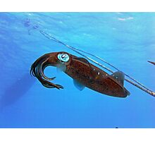 Underwater Squid Photographic Print