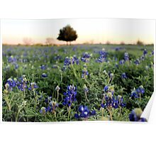 A Field Full of Texas! Poster