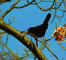 Bird on a Branch by Nazareth