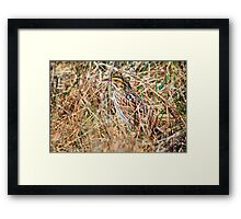 Bird in the Grass Framed Print