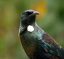 Portrait of a Tui.........! by Roy  Massicks