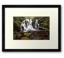 Rainforest rewards  Framed Print