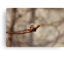 Handful of cotton balls  Canvas Print
