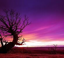The Beckon Tree by Zero Dean