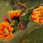Cactus Beauty by Lucinda Walter