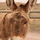 Lovable Burro by WILDBRIMOWILDMAN